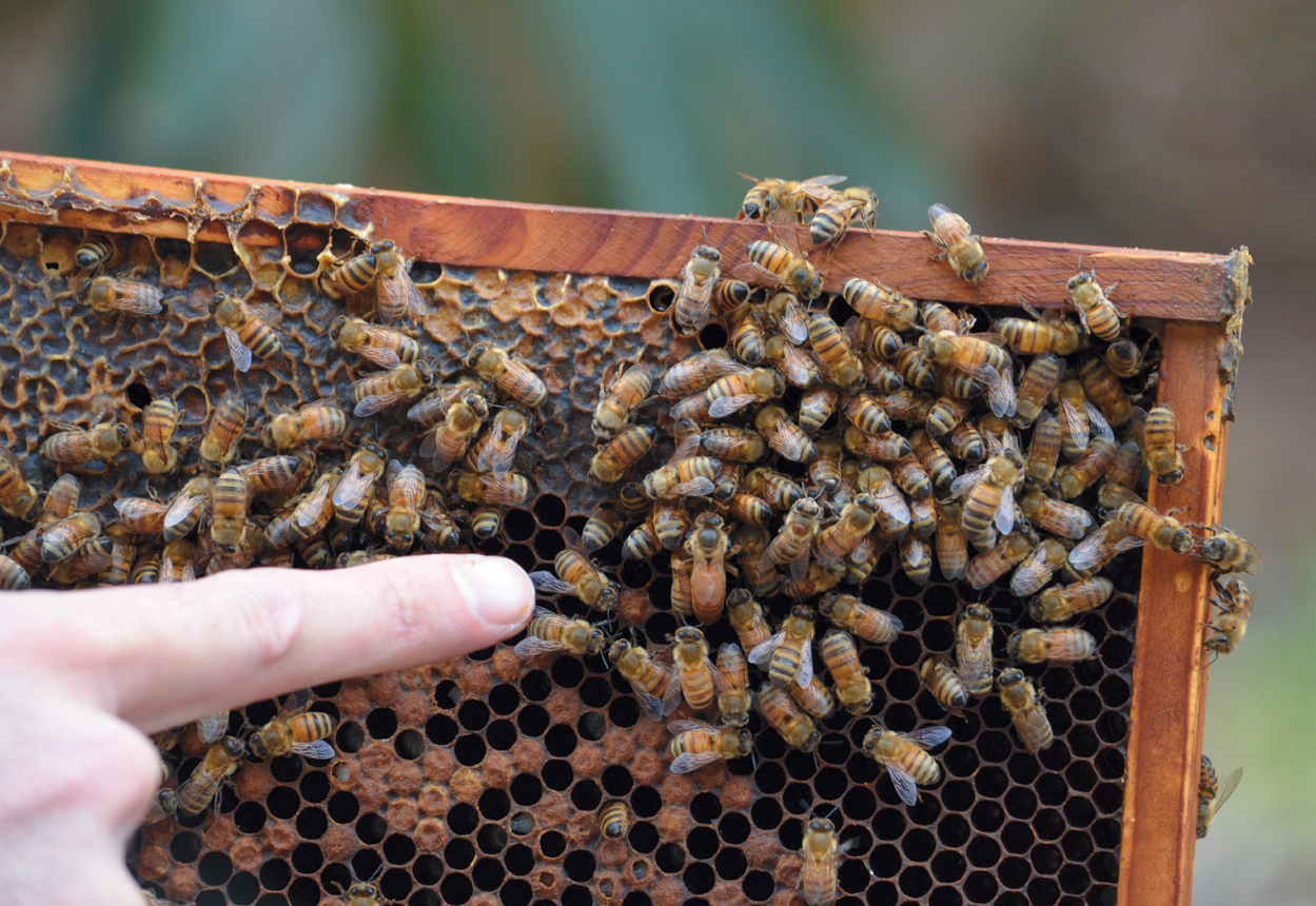 Hive Talkin': Ventura County is a Honey of a Place | Edible
