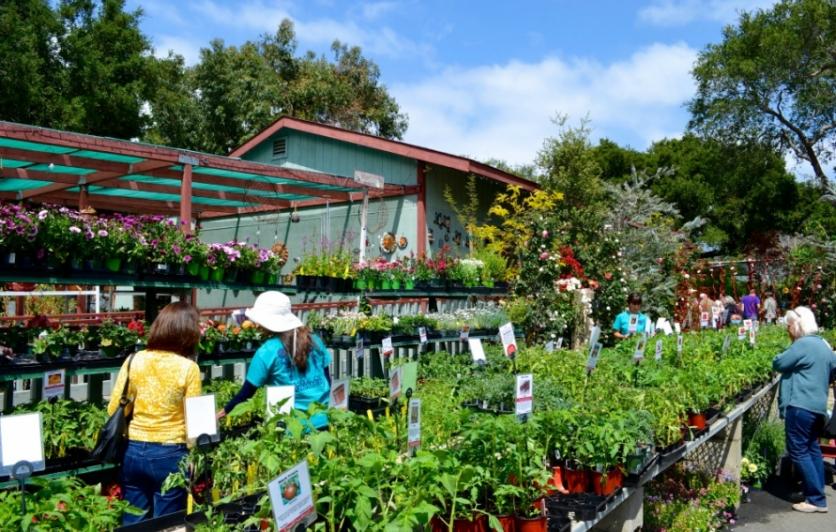 Flora Gardens Nursery Edible Ojai