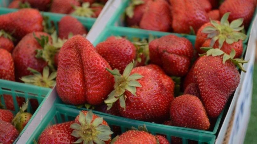mcgrath family farms strawberries