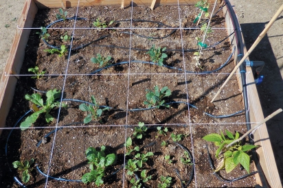 plants-separated-in-square-foot-garden