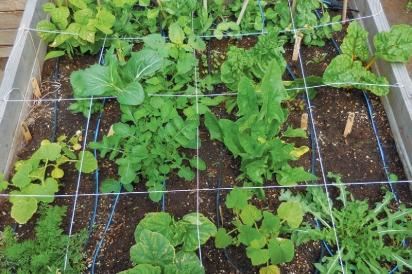 established-square-foot-garden