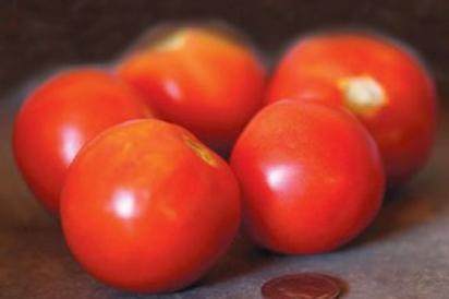 Siberian tomatoes