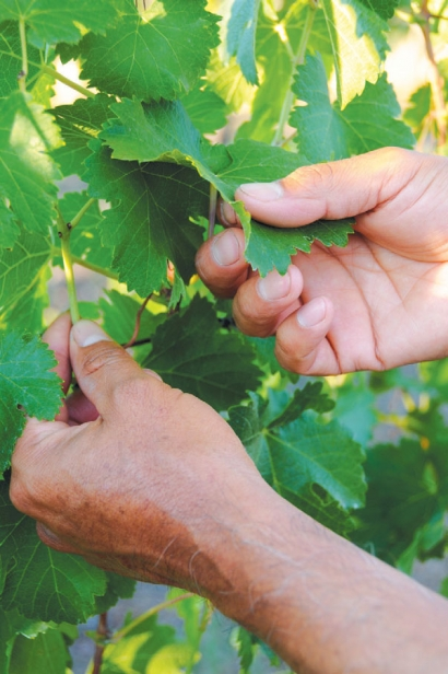 Martín Ramírez's hands at work